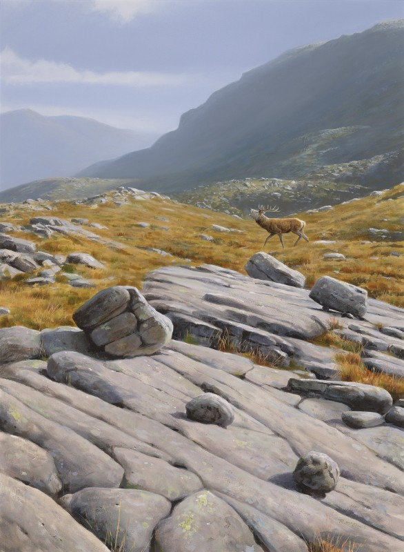 Rodger McPhail , Stag on high ground