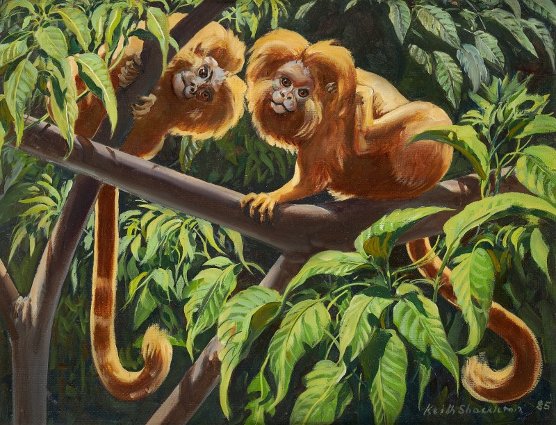 Keith Hope Shackleton MBE , Tamarins
