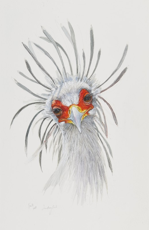 Secretary Bird II