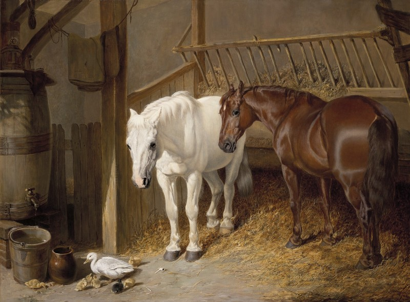 Horses and ducklings in a stable