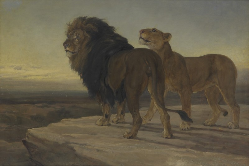 Lions surveying their territory