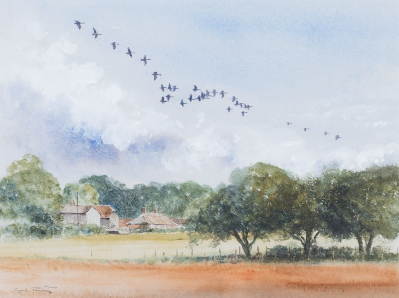 Canada geese over Coultershaw Farm