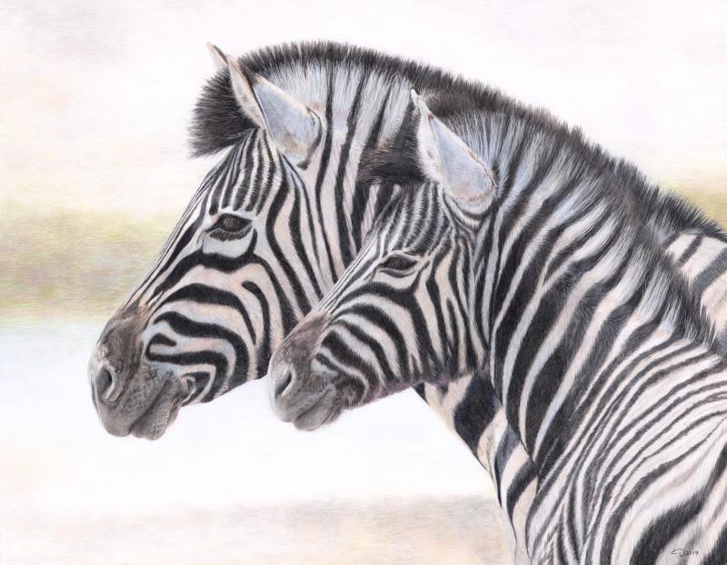 Zebra - stand by me