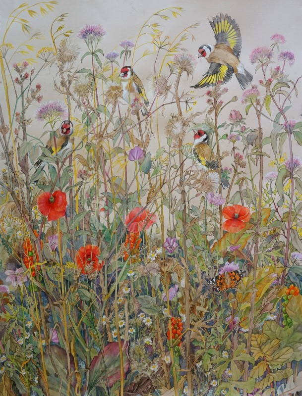 Goldfinches with Painted Lady in a summer meadow