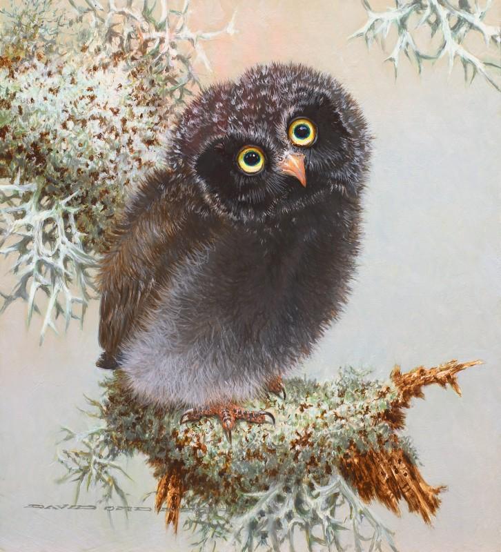 Baby Tengmalm's Owl II