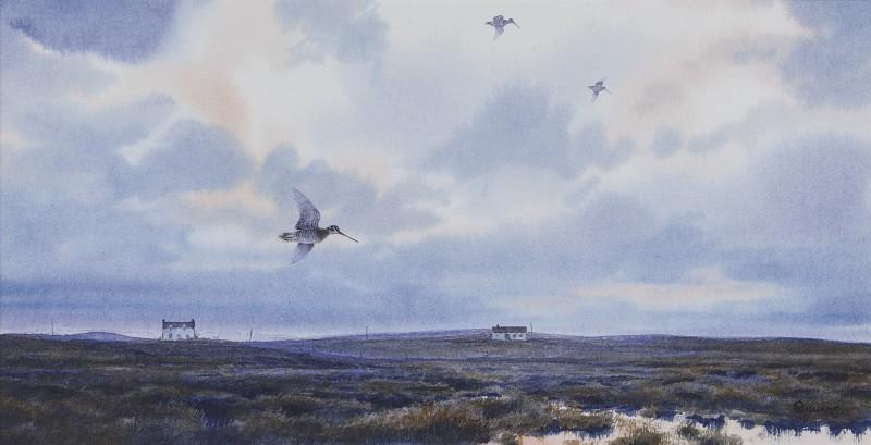 Owen Williams , Snipe over a marsh