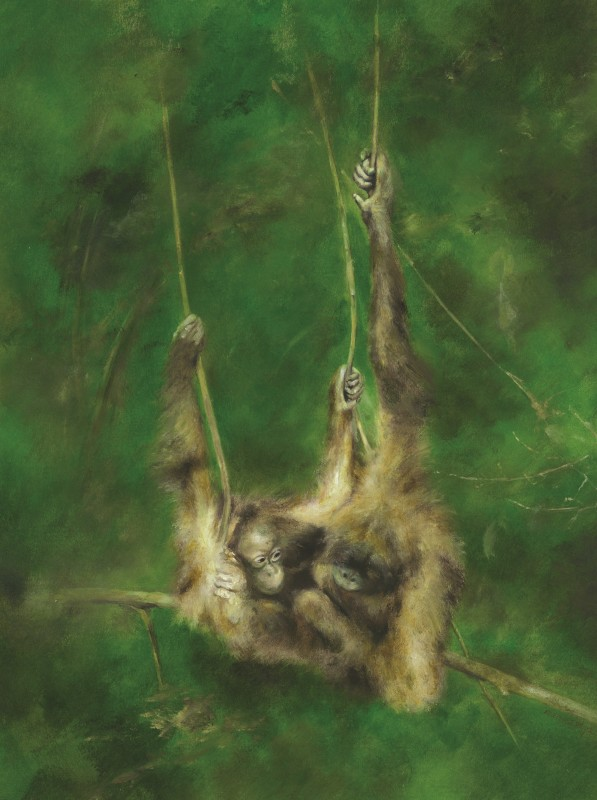 Mandy Shepherd , Orangutan
