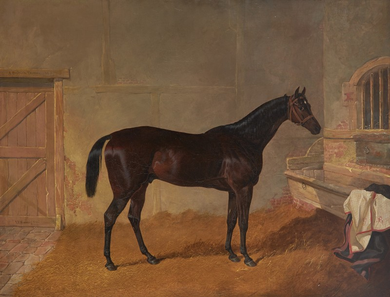 Mr G. Blakelock's bay racehorse in a stable