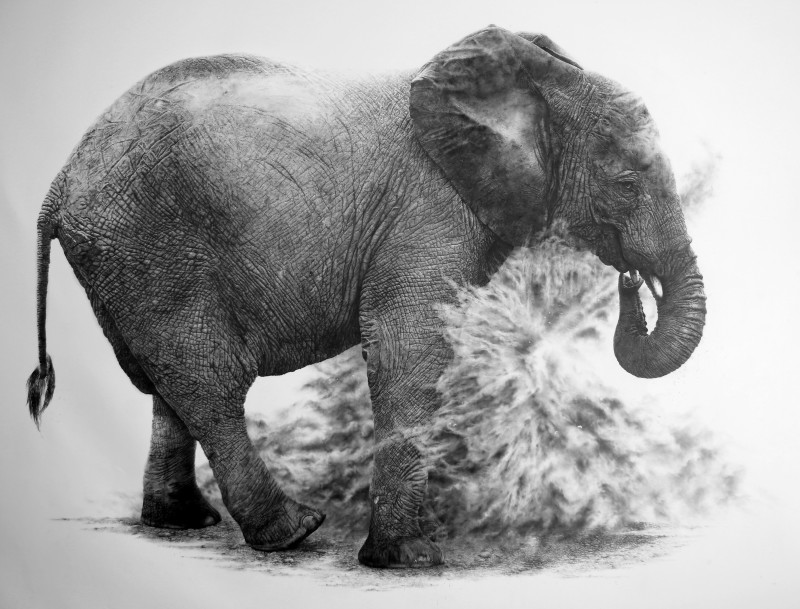 Lifesize Juvenile Elephant, 'Moyo'