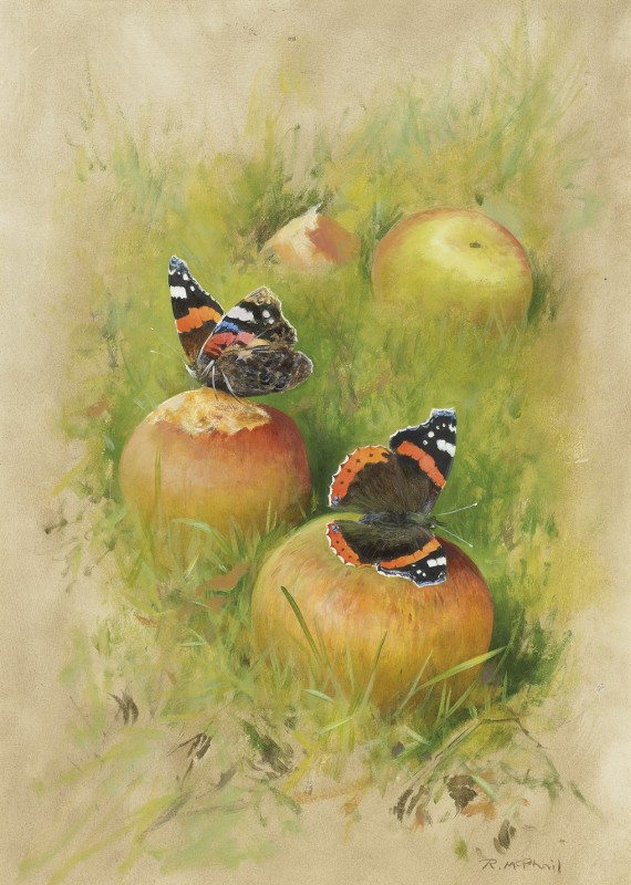 Rodger McPhail , Red Admirals on apples