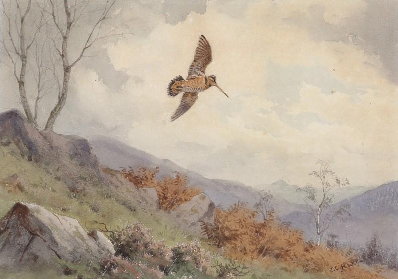 John Cyril Harrison , Woodcock over bracken