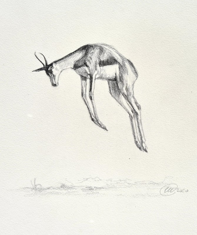 With a hop, skip and a pronk (Springbok)