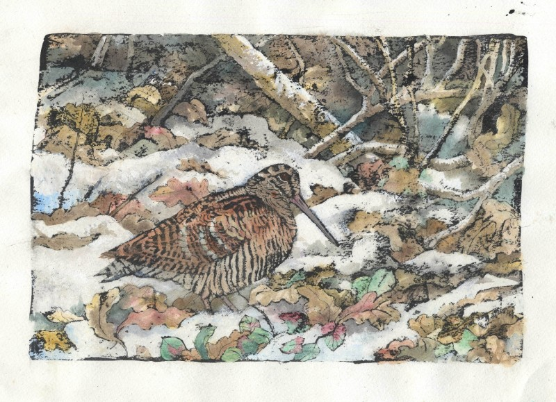 Woodcock in woodland snow