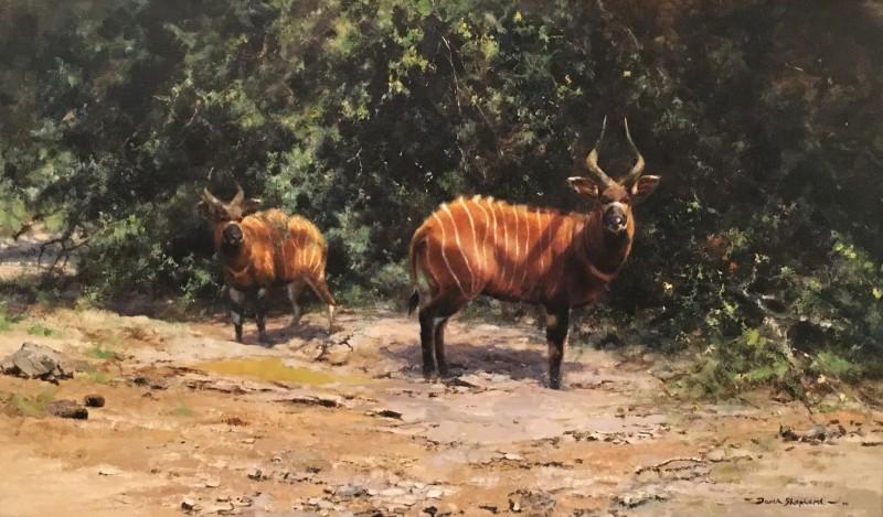 African afternoon - bongo antelope