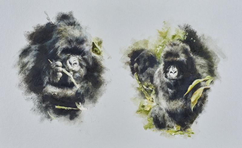 Mandy Shepherd , Gorillas