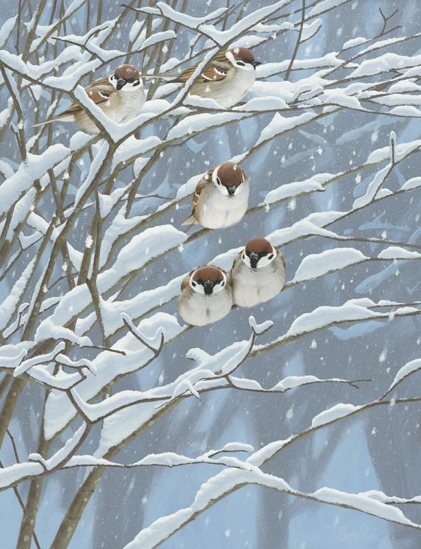 Tree sparrow tree
