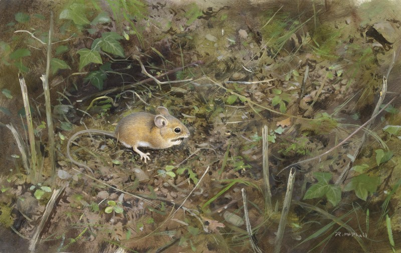Rodger McPhail , Woodmouse