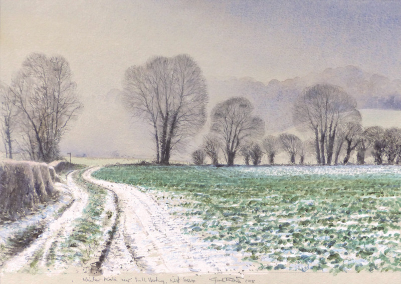 Winter Kale, near South Harting