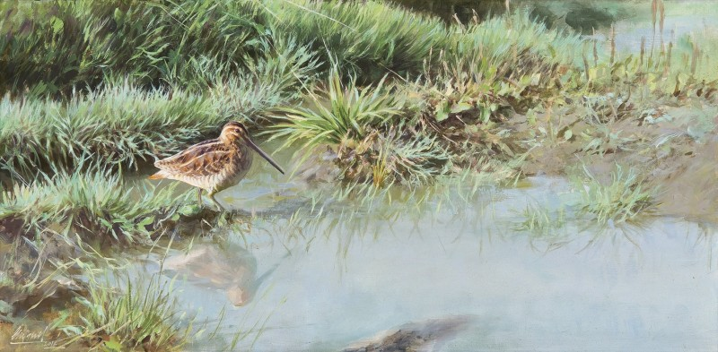 Snipe in the grass