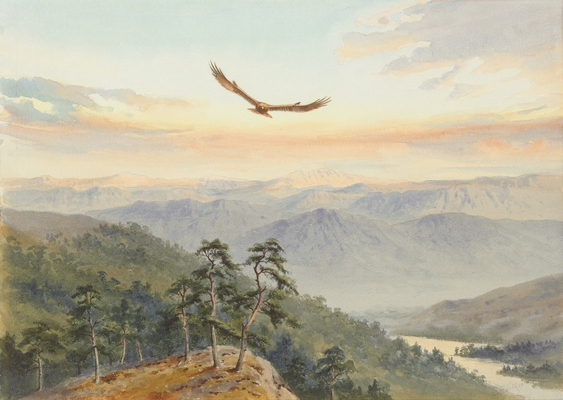 John Cyril Harrison , On the lookout above the glen, Golden Eagle