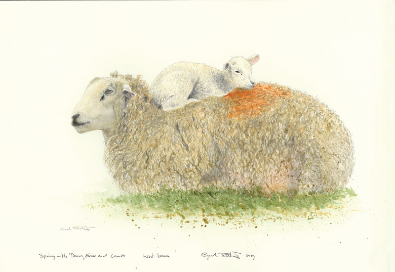 Spring on the Downs, Ewe and lamb
