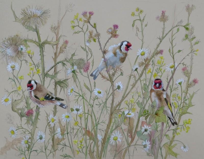 Emma Faull , Goldfinch study