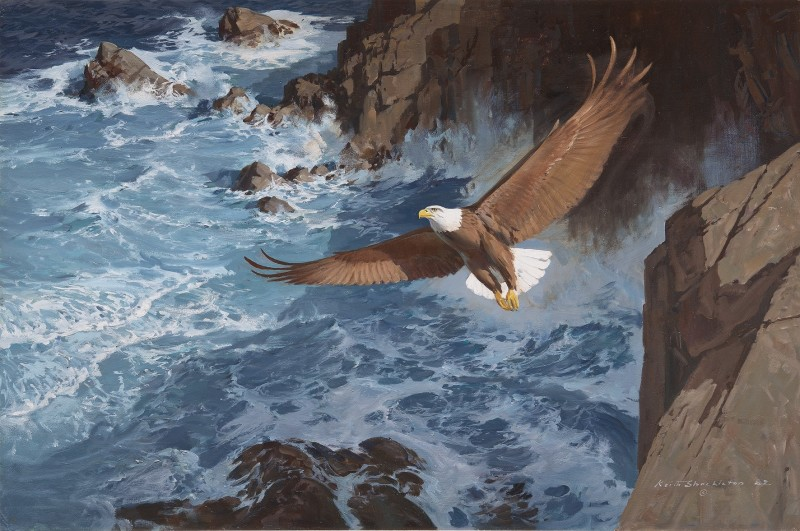 Bald eagle gliding over the waves