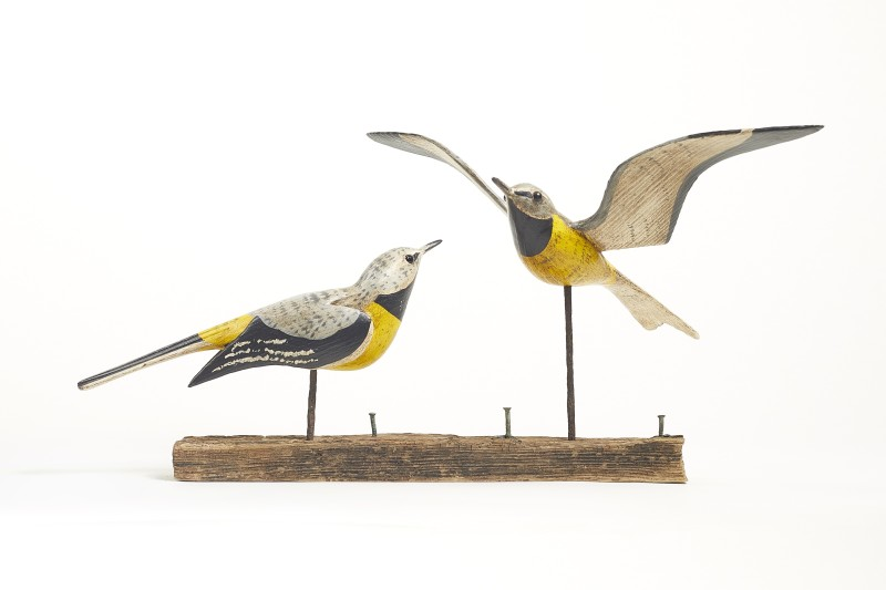 Yellow Wagtails