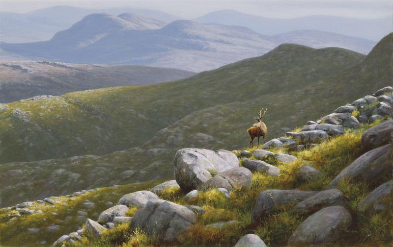Rodger McPhail , Highland Stag