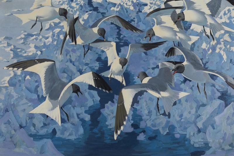 In the Icebreaker's wake, Sabine Gulls