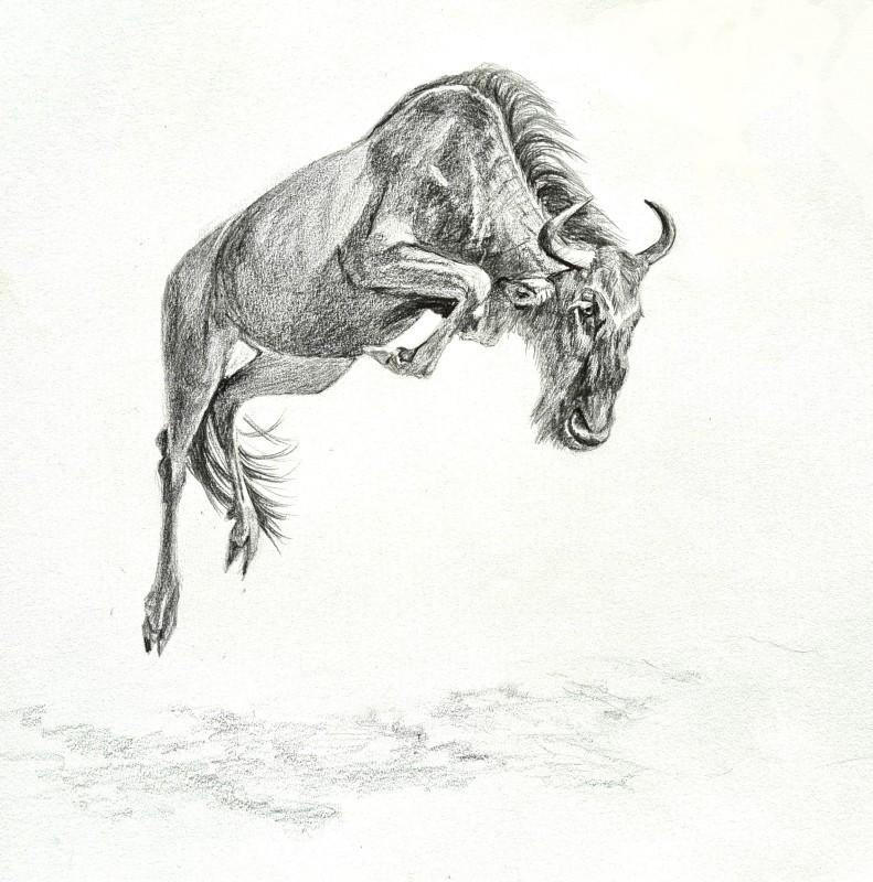Leap of Faith (Wildebeest)