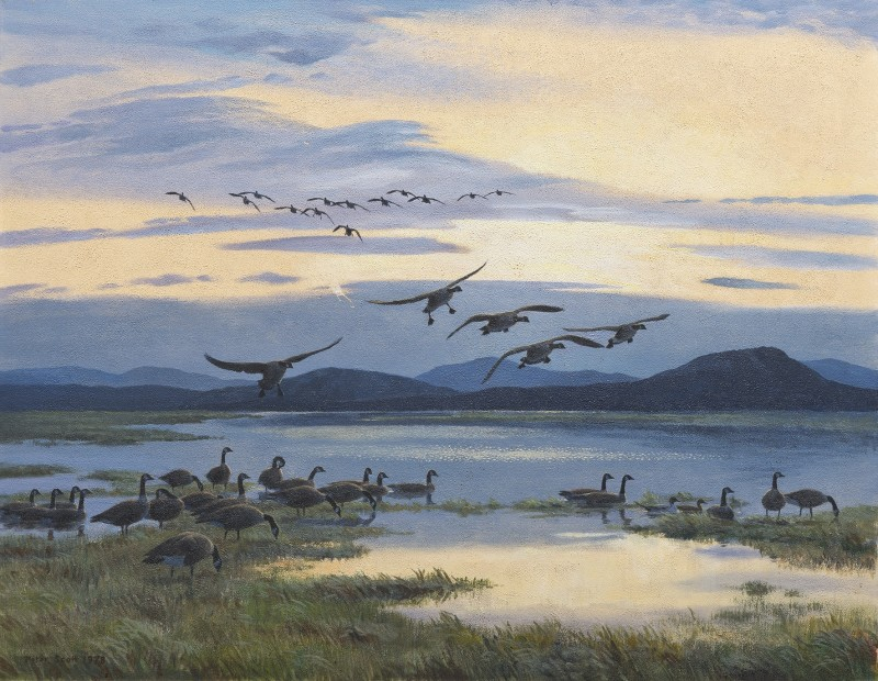 Geese flying down river at dusk