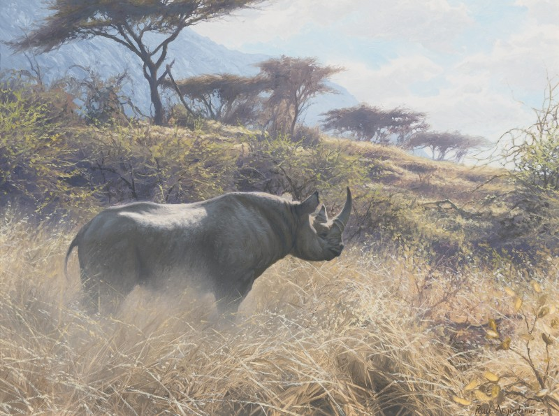 Mara Rhino