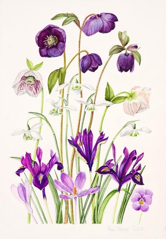 Ann Fraser , Purple Spring