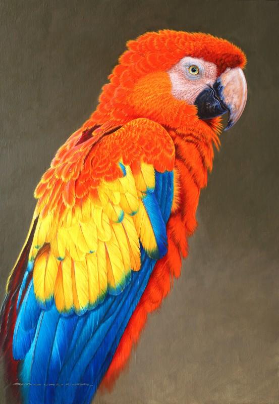 David Ord Kerr , Scarlet Macaw