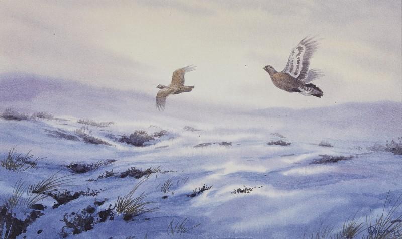 Owen Williams , Grouse over a snowy moor