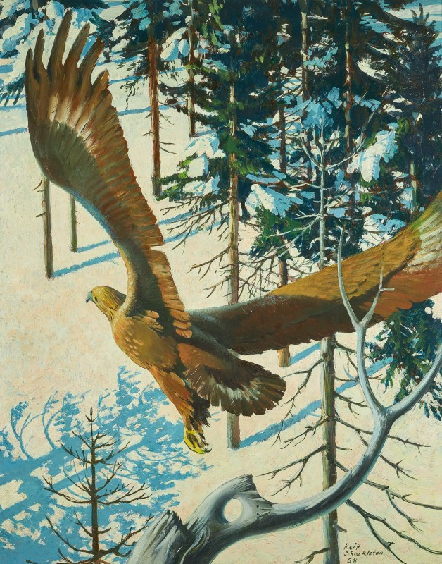 Keith Hope Shackleton MBE , Golden Eagle, 1958