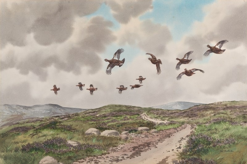 Grouse above the moorland