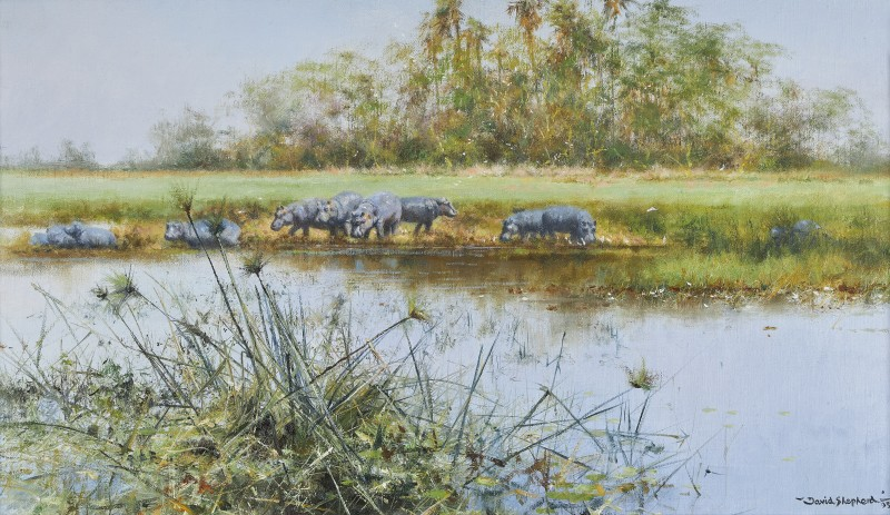 Lazy afternoon, Hippos