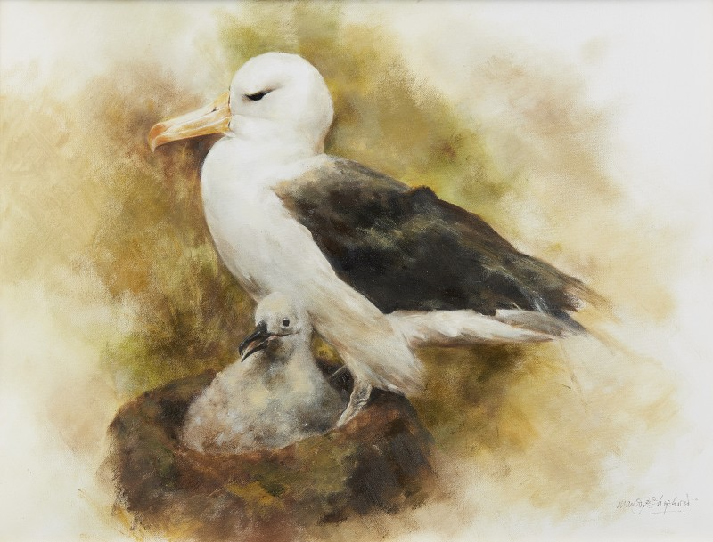 Mandy Shepherd , Albatross and chick