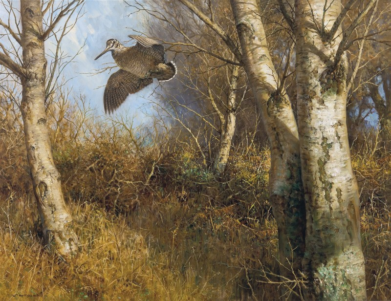 Woodcock in flight