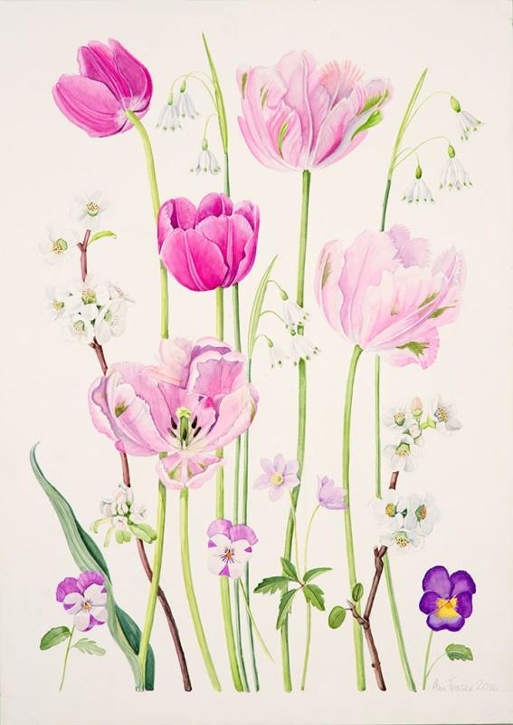 Ann Fraser , Pink Spring