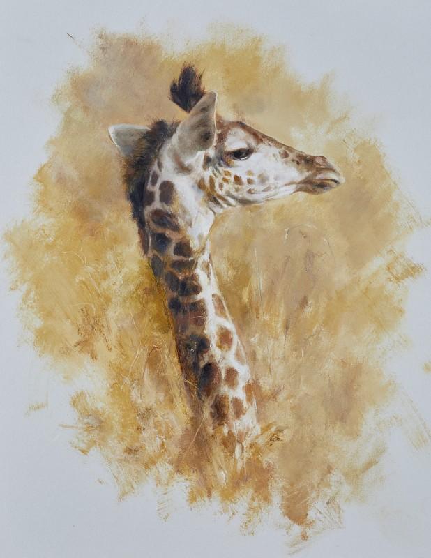 Mandy Shepherd , Giraffe