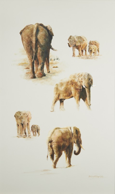 Chichele Hills - Elephants