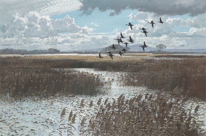 Pintails over the marsh