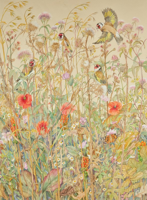 Emma Faull , Goldfinches with Painted Lady in a summer meadow