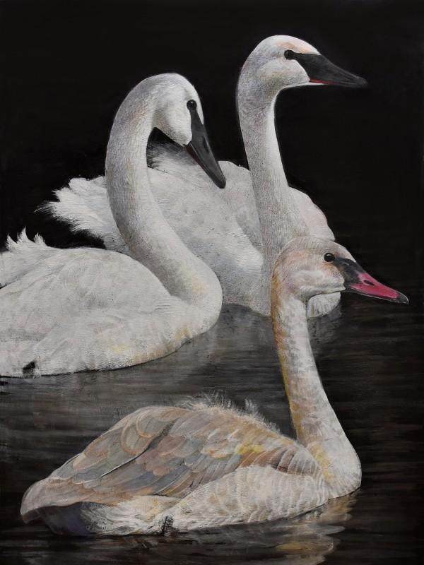 Emma Faull , Trumpeter Swans