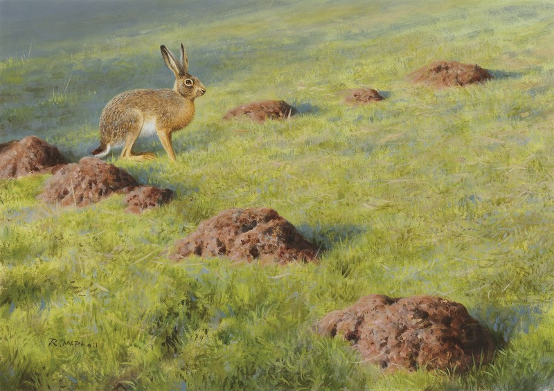 Rodger McPhail , Hare