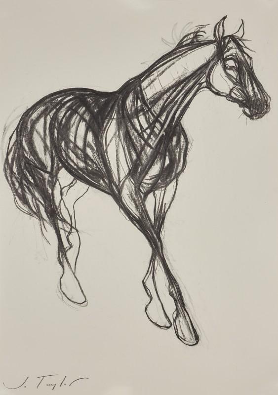 Jo Taylor , Invincible Horse II