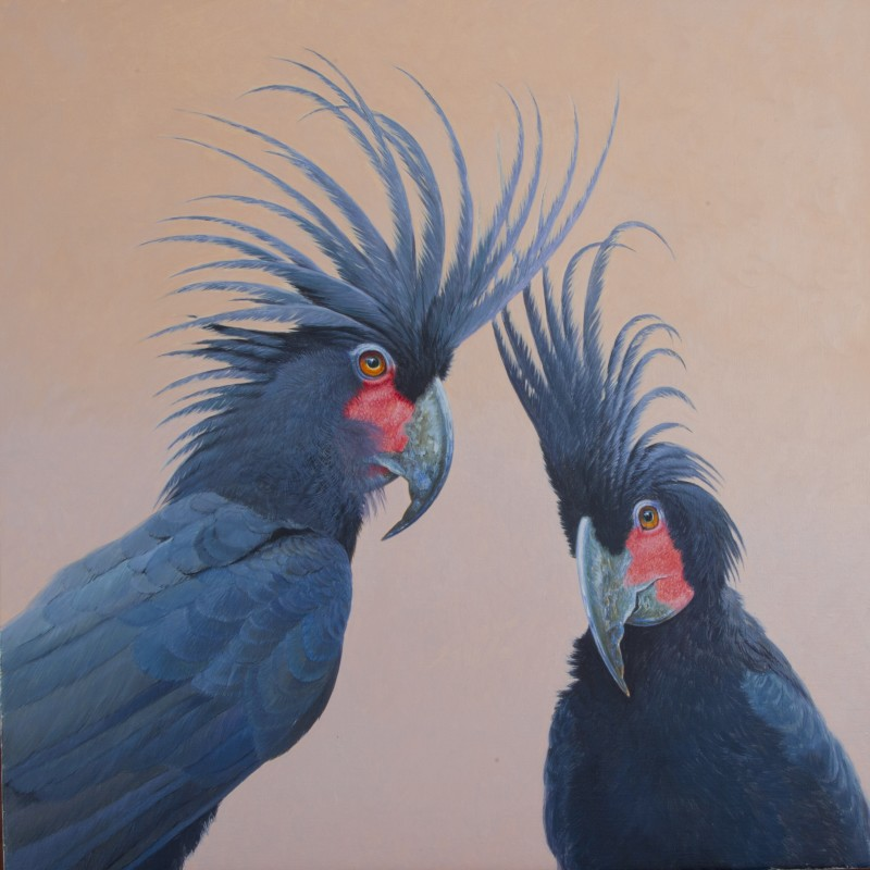 David Ord Kerr , Palm Cockatoos